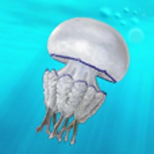 MedJelly (Alertes méduses)