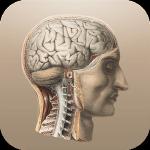 Anatomie Classique